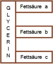 Aufbau von Triglyceriden: Glycerin mit drei Fettsäuren