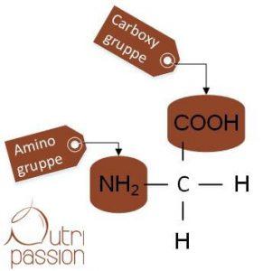 Aminosäure Glycin mit Beschriftung der Carboxy- und Aminogruppe