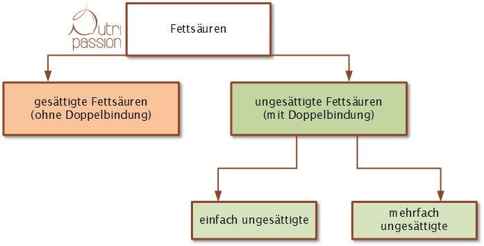 Einteilung der Fettsäuren nach Anzahl der Doppelbindungen