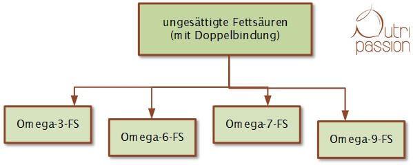 Einteilung der ungesättigten Fettsäuren nach Position der Doppelbindung