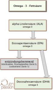 omega3fettsaure_stoffwechselweg
