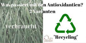 """Antioxidanten können entweder recycelt und dann wiederverwertet werden oder aber sie """"sterben"""" heldenhaft, während sie uns schützen wollen."""