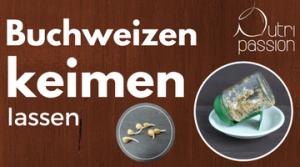 buchweizen-keimen-lassen-blogbeitrag
