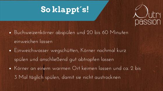 buchweizen-keime-so-klappt-es