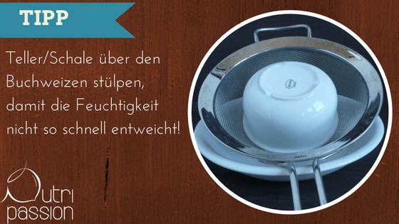 buchweizen-keimen-tipp