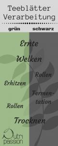 Verarbeitungsschritte der Teeblätter von grünem und schwarzem Tee.