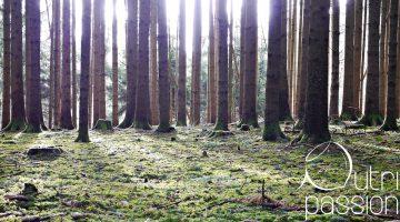 Waldspaziergänge auf Rezept?!