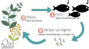 fisch-aquaponik-prinzip