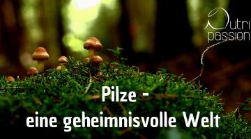 Pilze – Nahrung für Mensch, Tier und Wald