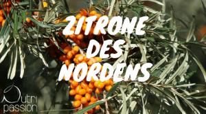 sanddorn-zitrone-des-nordens