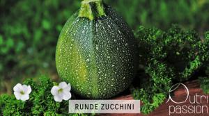 zucchini-rund