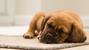 Erkaeltungszeit-schlafen