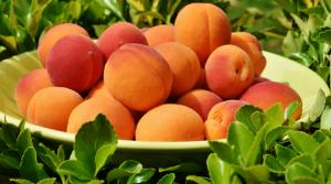 aprikosen2